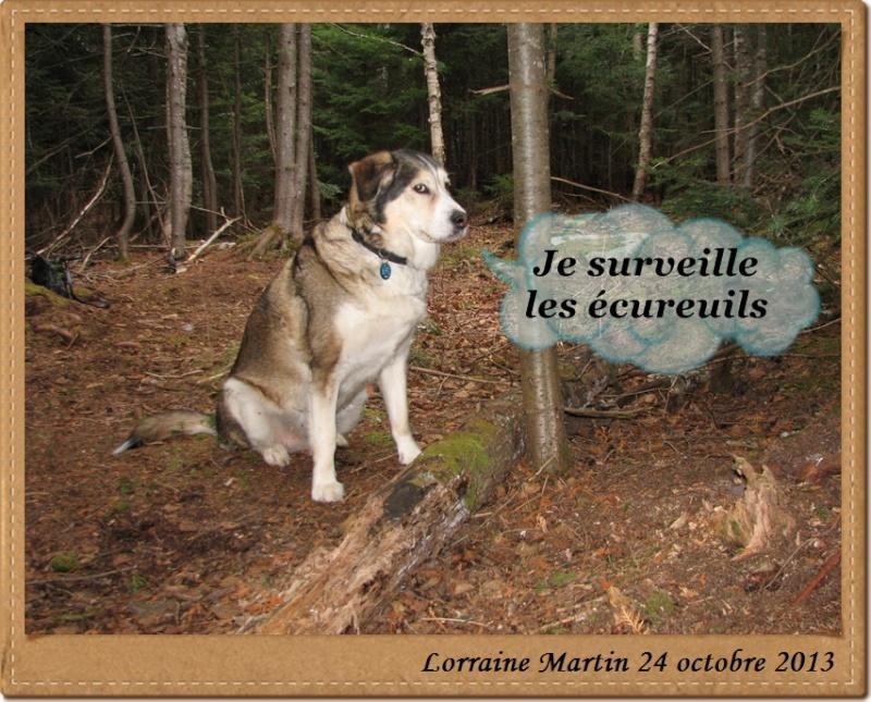Écureuil roux  Beauta14
