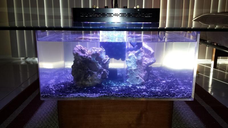 20 gal coffee table reef aquarium 2013-112