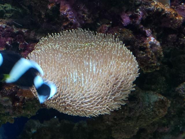 Aquarium de Samix  - Page 5 11910