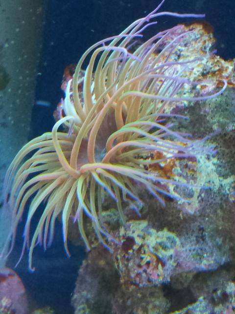 Aquarium de Samix  - Page 5 12310