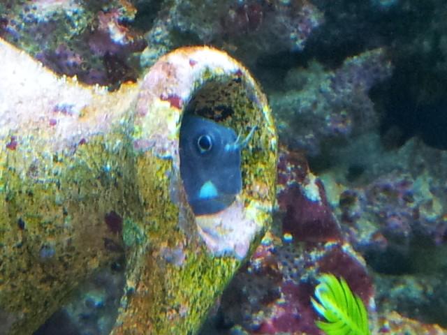 Aquarium de Samix  - Page 5 13310