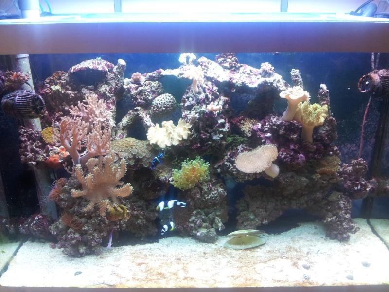 Aquarium de Samix  - Page 4 20131211