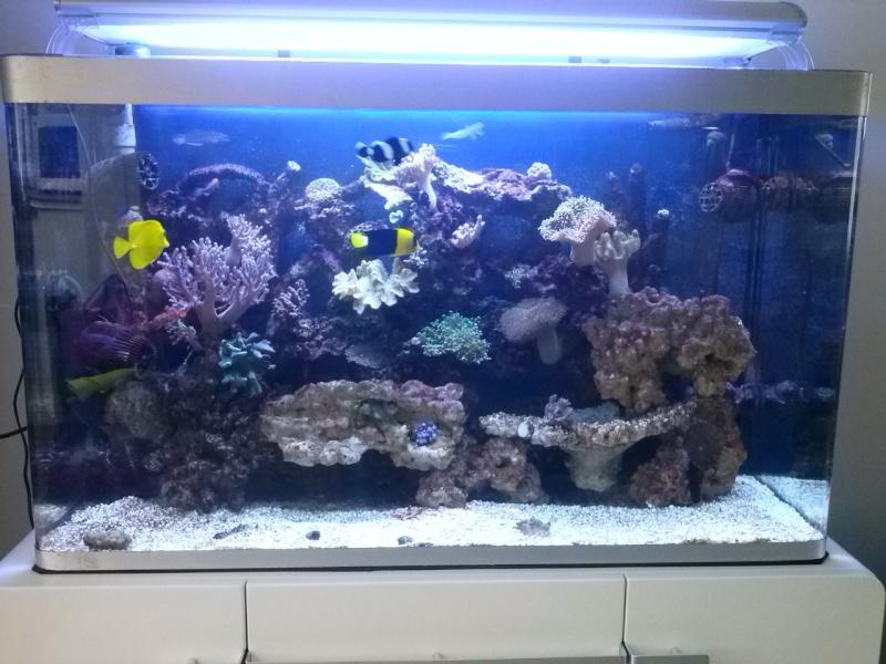 Aquarium de Samix  - Page 6 Cam00110