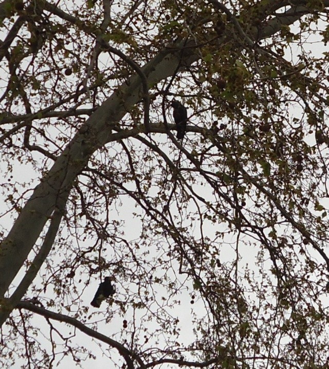 les oiseaux et petites bêtes au cours de nos balades - Page 2 01618