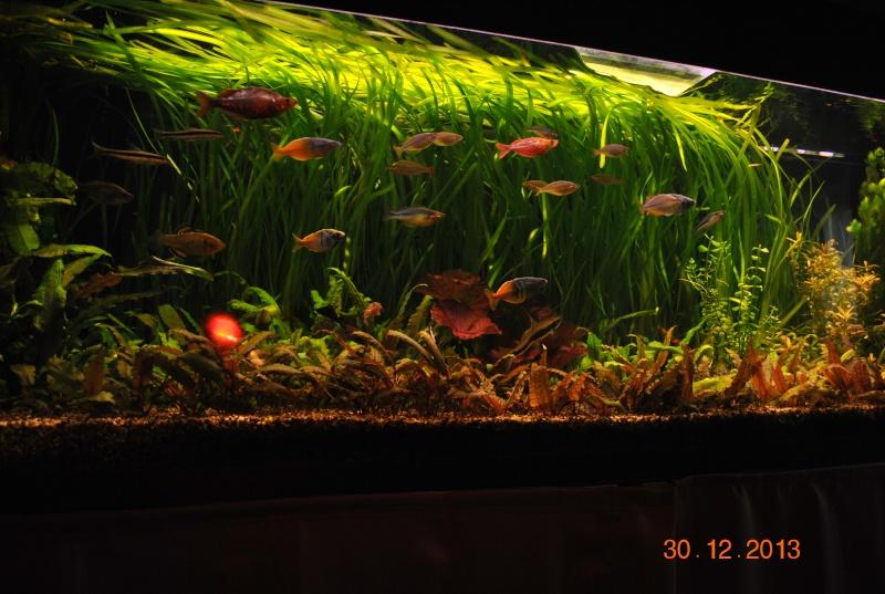 mon aquarium de 360 litres  - Page 3 Noel_010