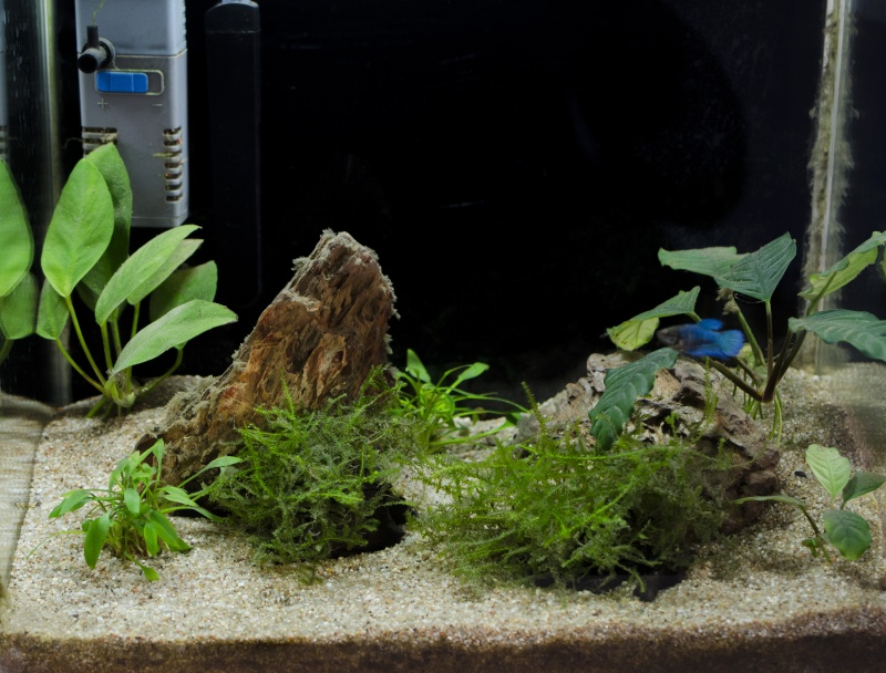 24 litres pour femelle betta Aquari11