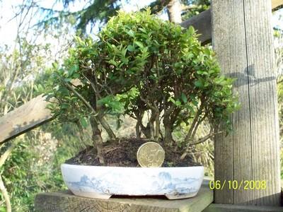la passion du bonsai - Page 3 Mini_b10