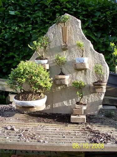 la passion du bonsai - Page 3 Mini_b11