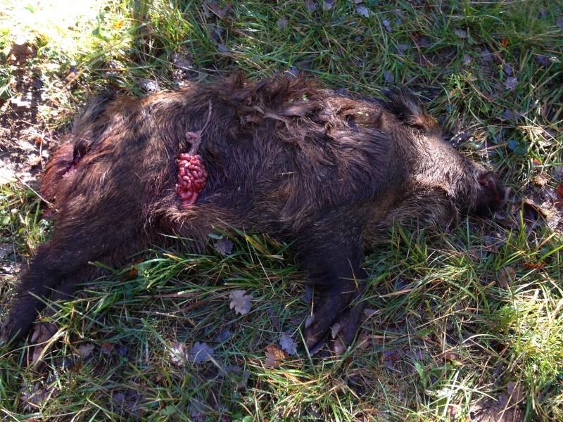 Saison de chasse au Grand Gibier 2013/2014 - Page 6 Img_0211