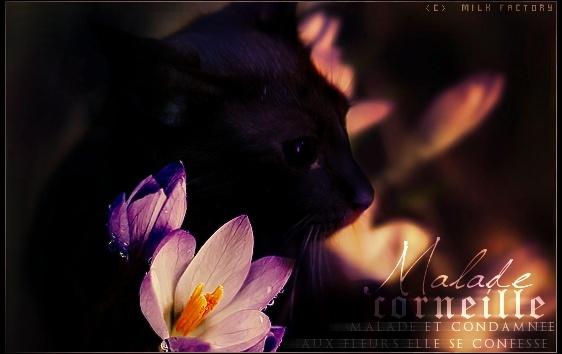 Spirit ♥ Cornei13