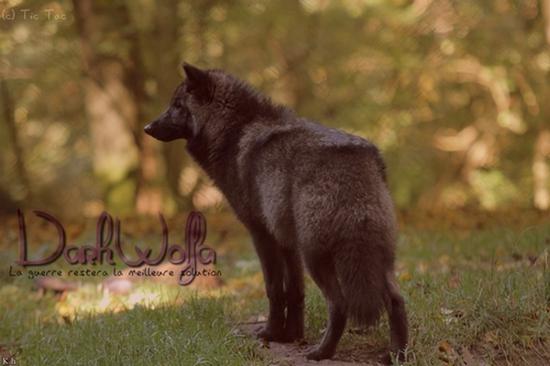 Vidéo Officielle de Legends Of Wolves Dw1010
