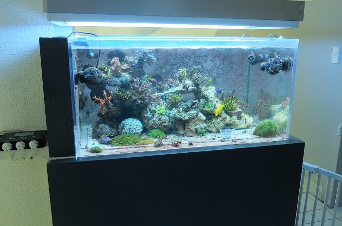 Trombinoscope des bacs en eau de mer Dscf0214