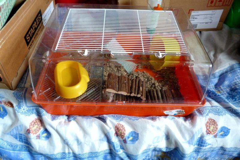 Cage plexi et etages ferplast belgique  Cage0110