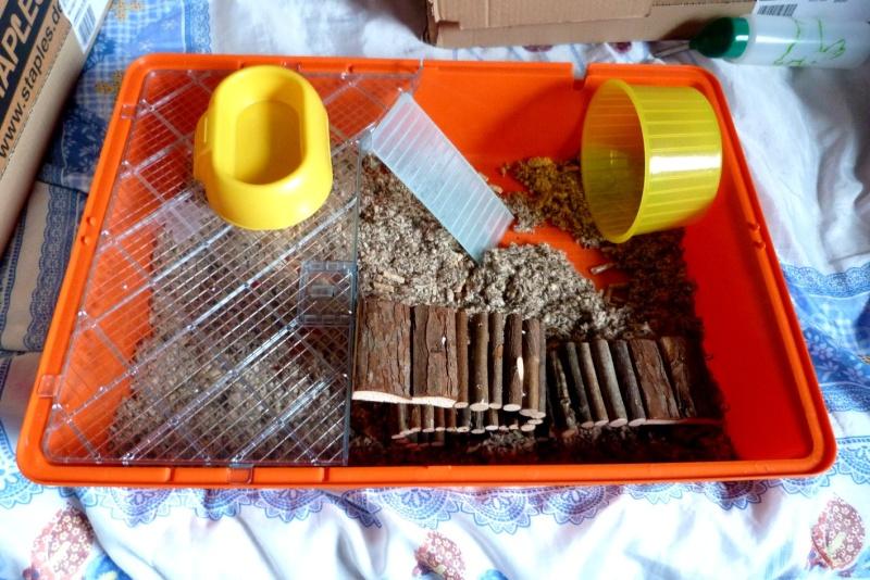 Cage plexi et etages ferplast belgique  Cage0310