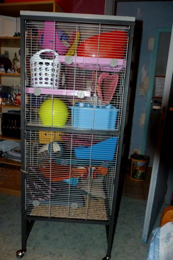 Photos de vos cages - Page 38 Derrie12