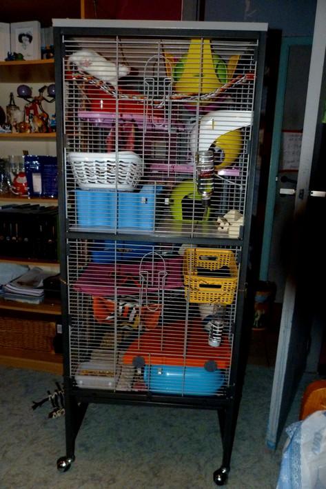 Photos de vos cages - Page 39 Devant12