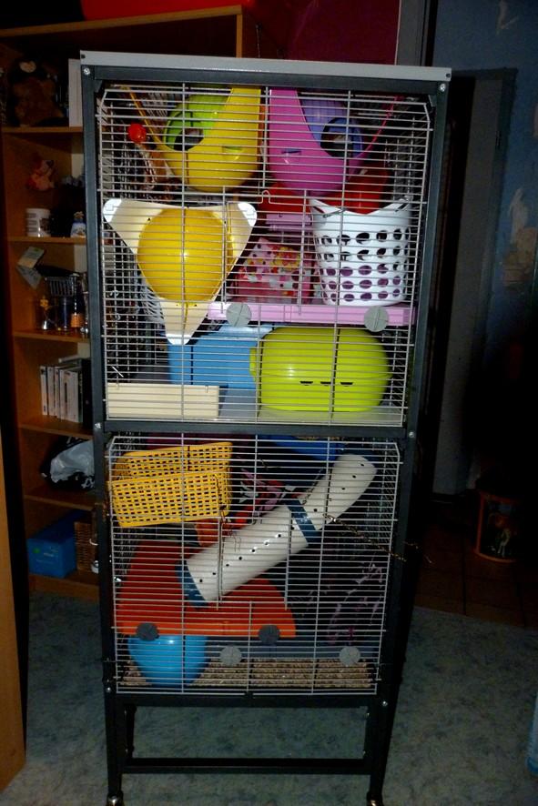 Photos de vos cages - Page 39 Droite12