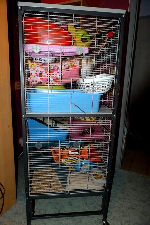 Photos de vos cages - Page 38 Gauche12