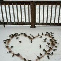 pour les amoureux des animaux Moinea10