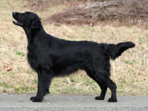 Региональная выставка собак «Балтийский сувенир»  29 Марта — 30 Марта  0110