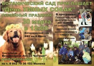 День умных собак Ae4dd110