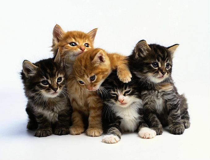 Выставка-продажа котят разных пород  20 Октября — 20 Октября  Privet10