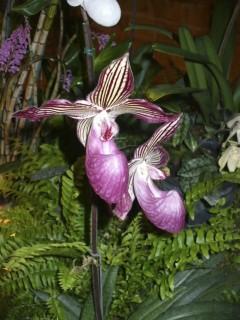 Exposition Orchidées Fontfroide octobre 2013 (4/5/6) - Page 2 P1280610