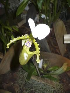 Exposition Orchidées Fontfroide octobre 2013 (4/5/6) - Page 2 P1280622