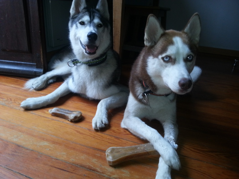 Loki et Gaïa 99910
