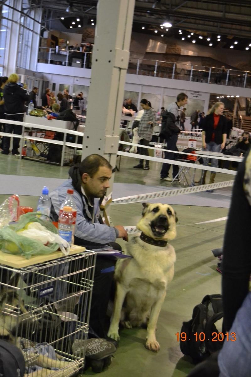 19.10.2013  IKU VIP DOG _dsc0213