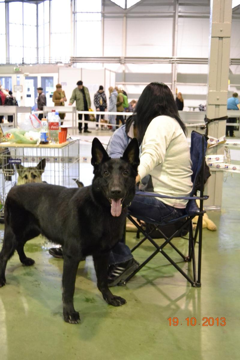 19.10.2013  IKU VIP DOG _dsc0214