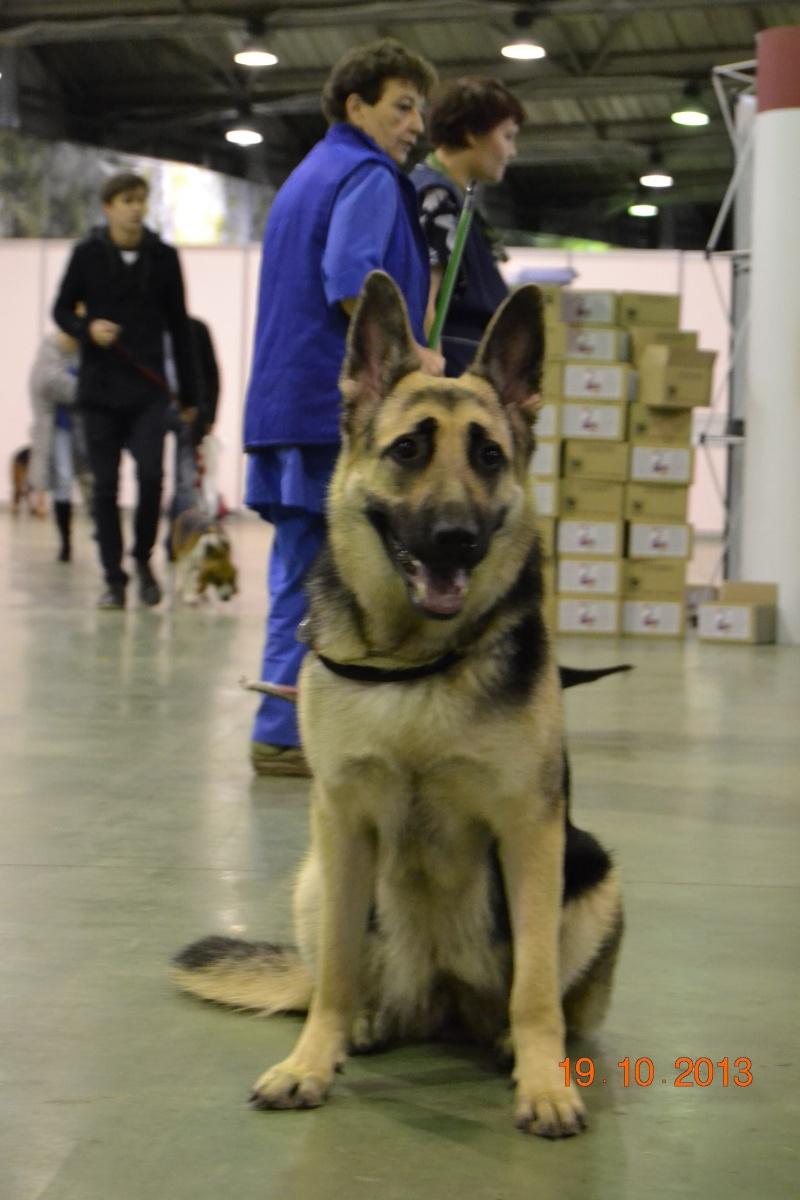 19.10.2013  IKU VIP DOG _dsc0216