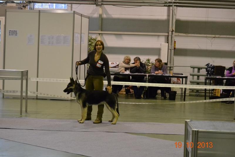 19.10.2013  IKU VIP DOG _dsc0220