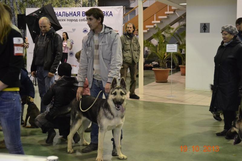 19.10.2013  IKU VIP DOG _dsc0317