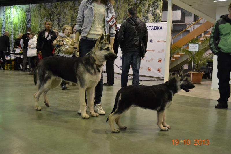 19.10.2013  IKU VIP DOG _dsc0318