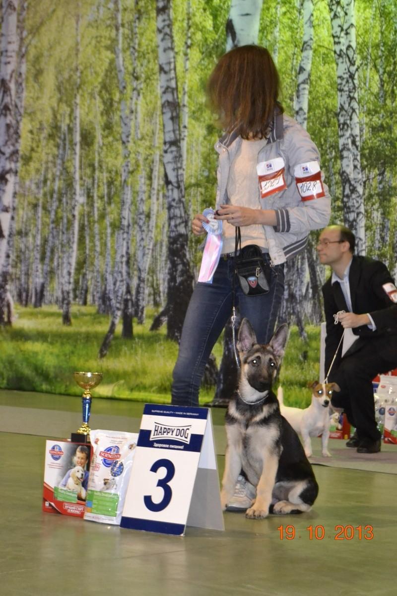 19.10.2013  IKU VIP DOG _dsc0419