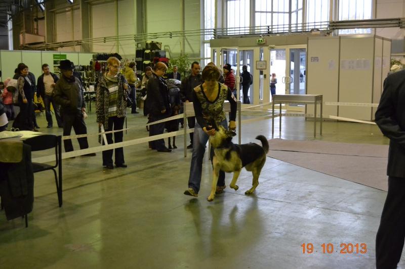 19.10.2013  IKU VIP DOG _dsc0420