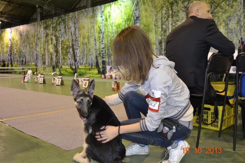 19.10.2013  IKU VIP DOG _dsc0422