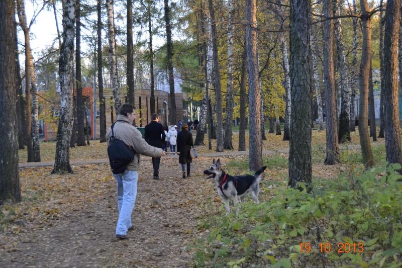 19.10.2013  IKU VIP DOG _dsc0529