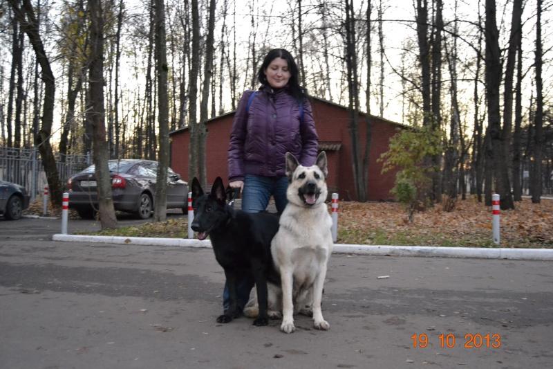 19.10.2013  IKU VIP DOG _dsc0614