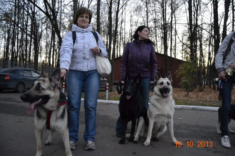 19.10.2013  IKU VIP DOG _dsc0615