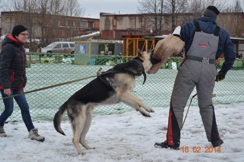ЗКС ЗАЩИТНО КАРАУЛЬНАЯ СЛУЖБА Dsc_0232