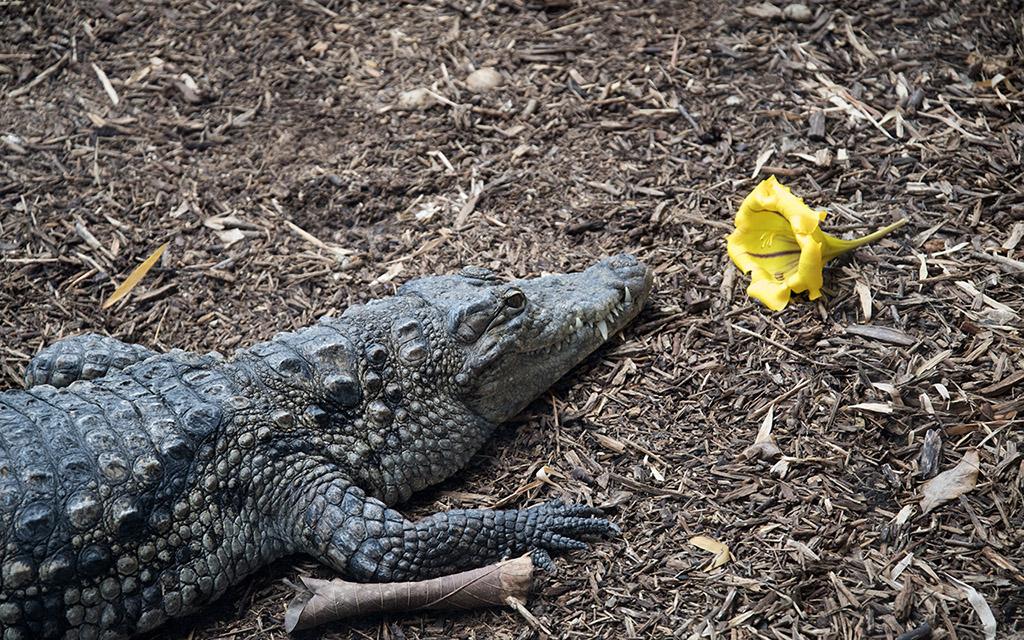 La Ferme aux crocodiles à Pierrelatte Drome  Imgp1210
