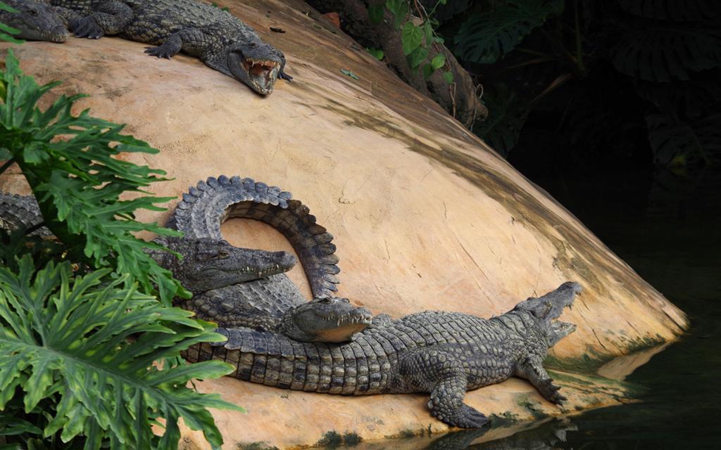La Ferme aux crocodiles à Pierrelatte Drome  Imgp6112