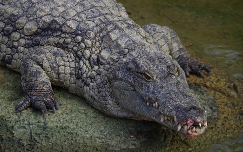 La Ferme aux crocodiles à Pierrelatte Drome  Imgp6114