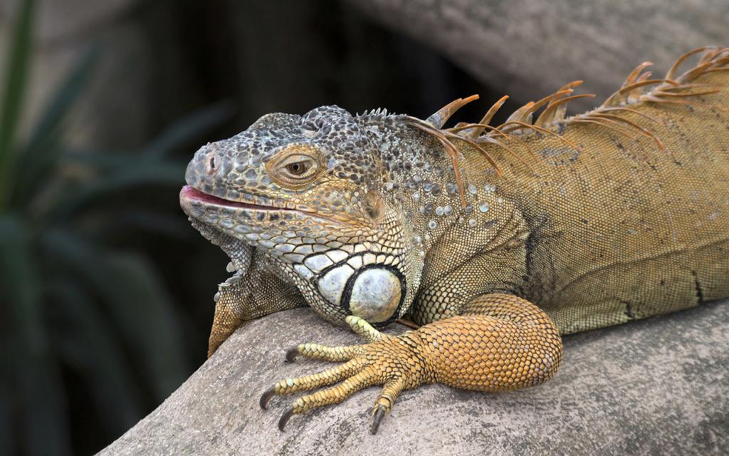 La Ferme aux crocodiles à Pierrelatte Drome  Imgp6115