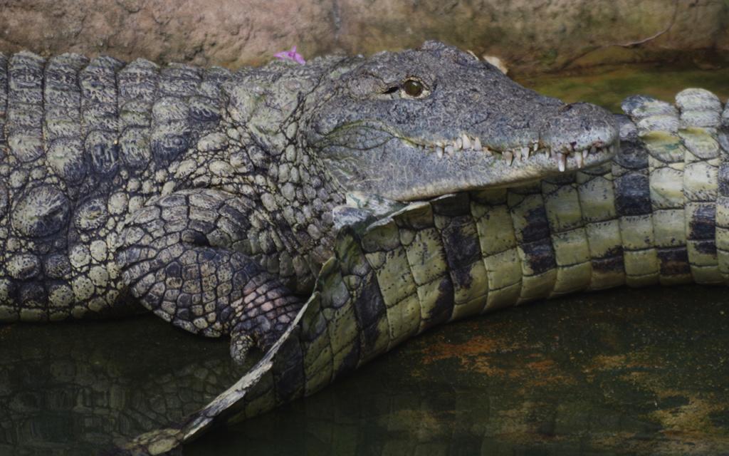 La Ferme aux crocodiles à Pierrelatte Drome  Imgp6117