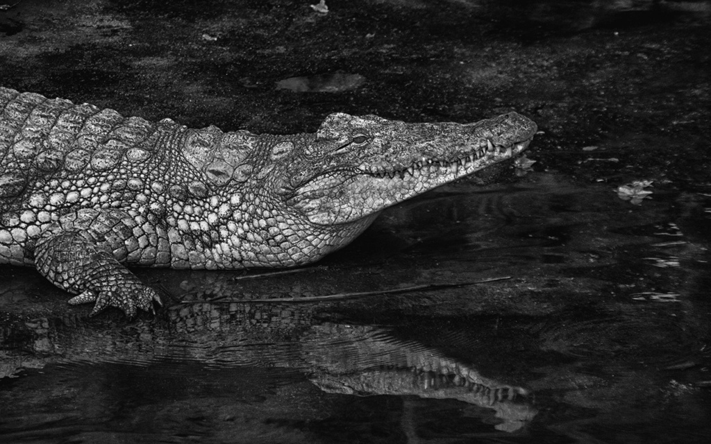 La Ferme aux crocodiles à Pierrelatte Drome  Imgp6118