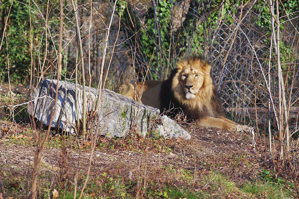 Zoos / Parcs animaliers - Page 25 Imgp7815