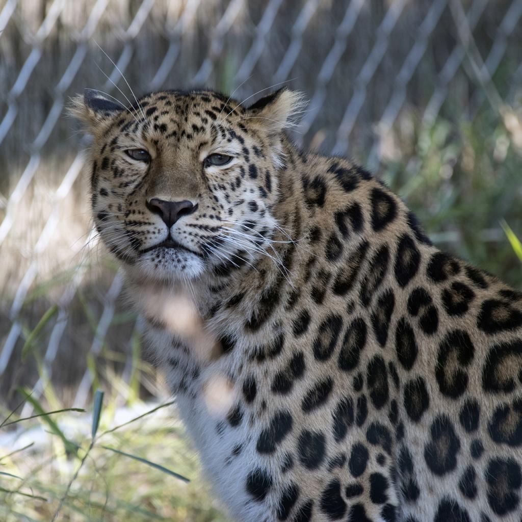 Zoos / Parcs animaliers - Page 25 Imgp7816
